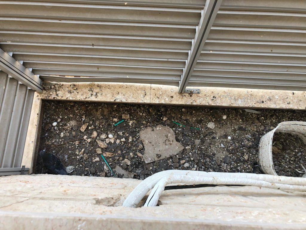 ניקוי צואת יונים בחיפה